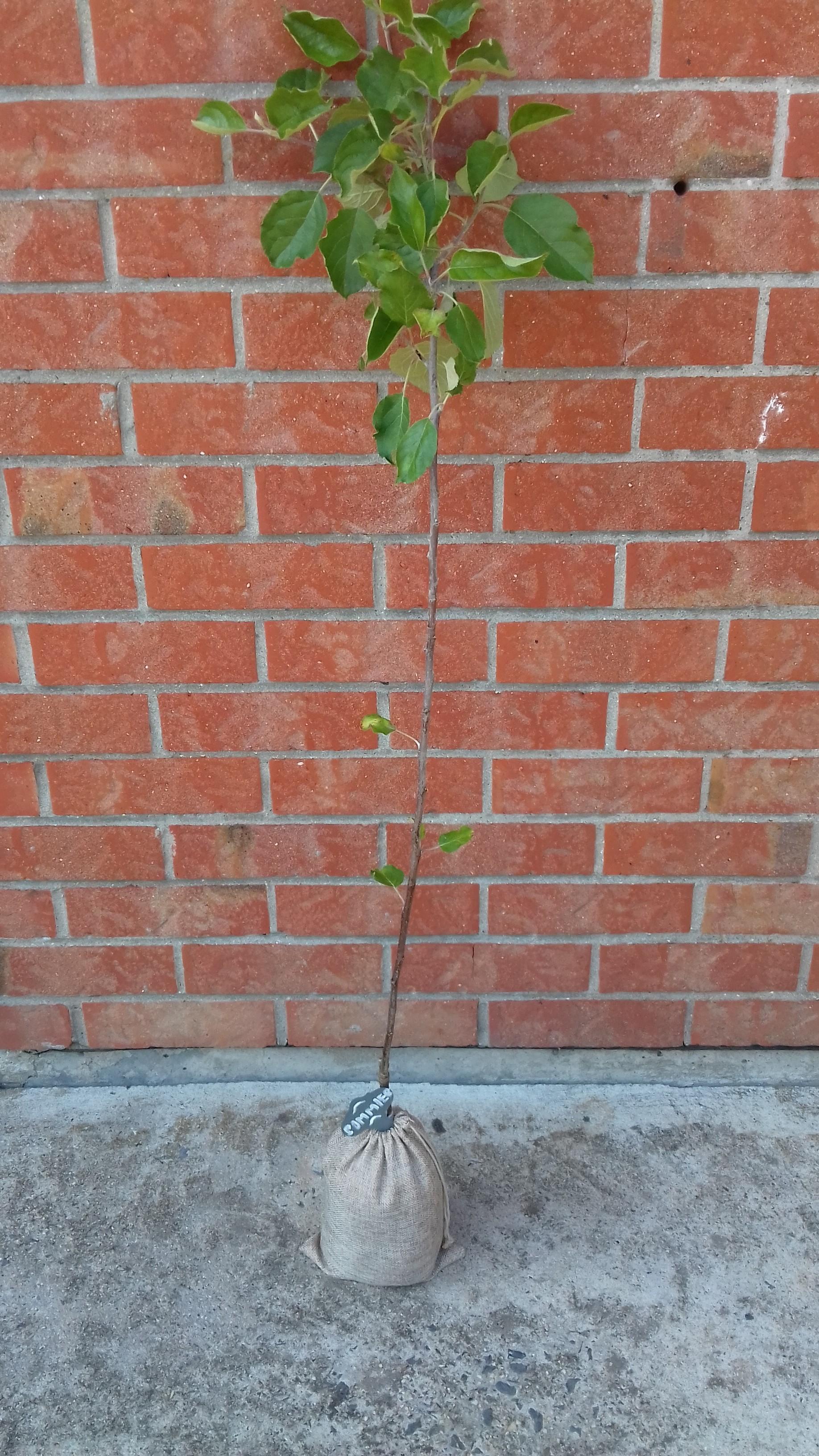l'arbre symbolique - un cadeau original pour une naissance, un